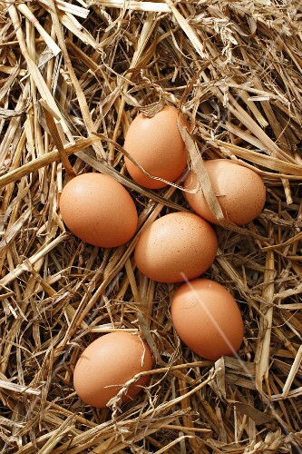 Brown eggs in straw