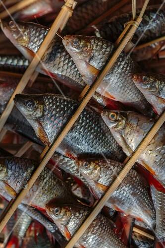 Fresh water fish, being prepared for grilling (Luang Prabang, Laos)
