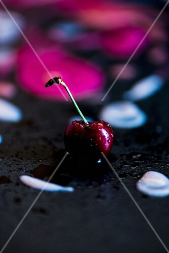 One Red Cherry with Stem and Water Drop on White