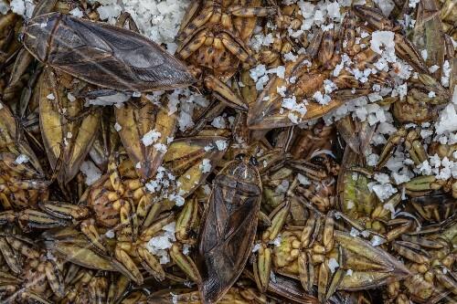 Water bugs at a market in Bangkok, Thailand