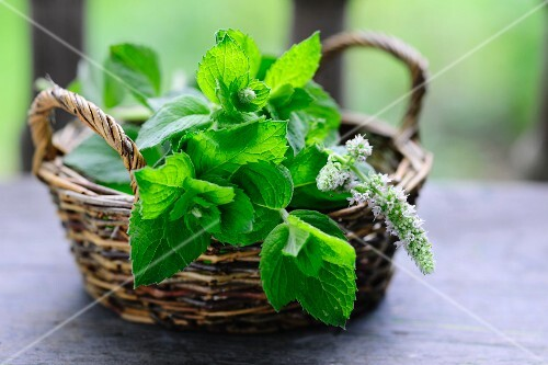 A basket of fresh mint