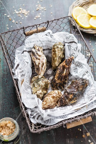 Fresh oysters on a piece of newspaper in a wire basket
