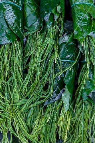 Cha om (acacia pennata), a legume, Thailand