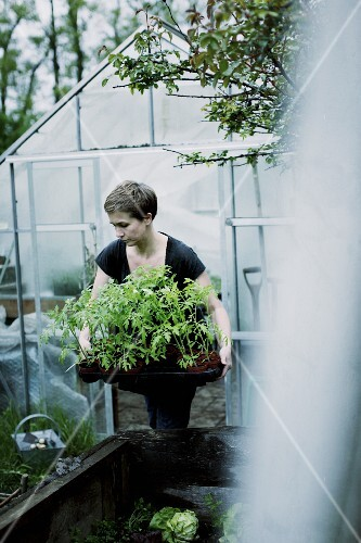 A woman with tomato plants in front of a greenhouse