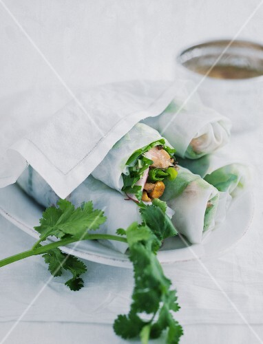 Vietnamese spring rolls on a white porcelain plate