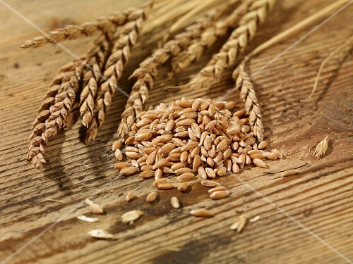 Spelt grains and ear of spelt on a wooden surface