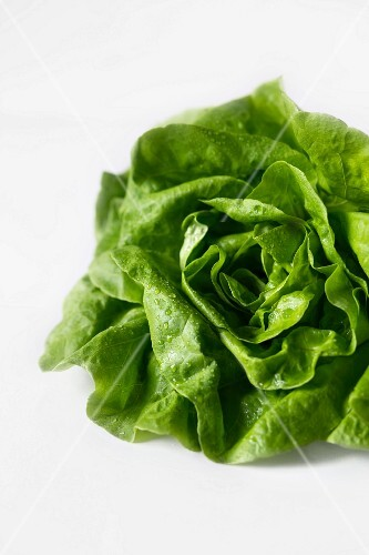 A lettuce on a white surface