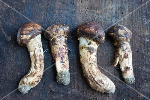 Four fresh matsutake mushrooms