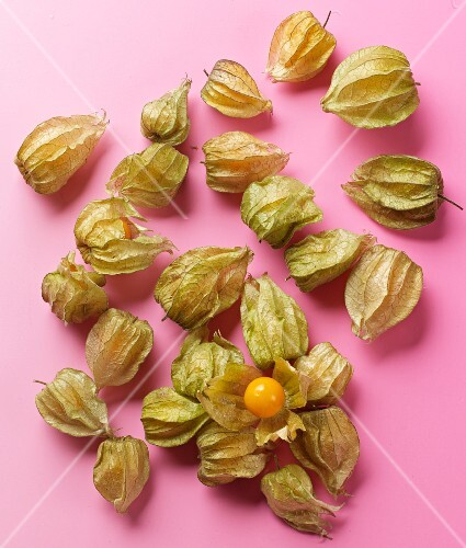 Physalis on a pink surface