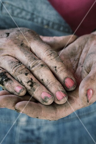 Hands covered in soil