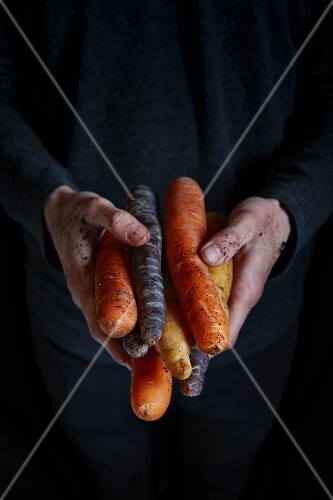Hands holding various types of carrots