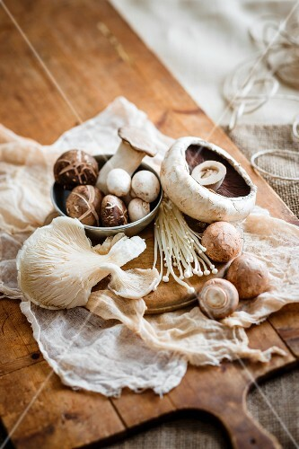 Various fresh mushrooms on a chopping board
