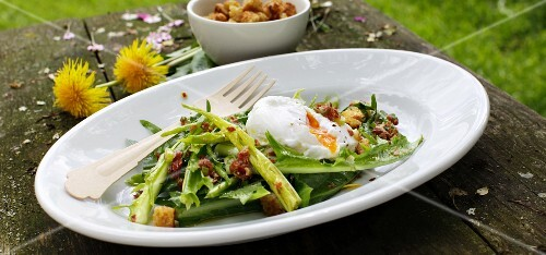 Dandelion salad with fried bacon and poached egg