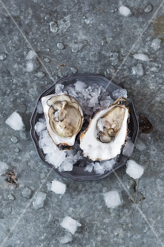Fresh raw oysters on a plate with ice.