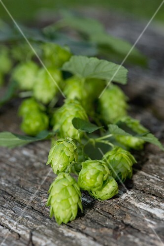 Hops on a wooden table