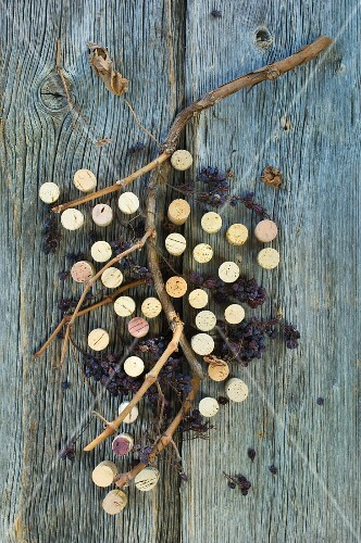 Wine corks and dried grapes on vine on wooden surface