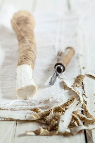 Horseradish, partially peeled, on a cloth