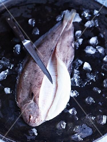 Sole on ice