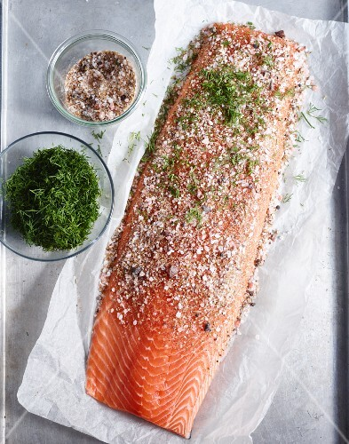 Salmon fillet being marinated with dill, spice salt and sugar