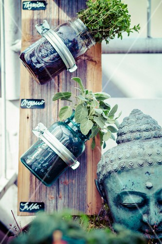 Herbs planted in mason jars attached to wooden board next to head of Buddha