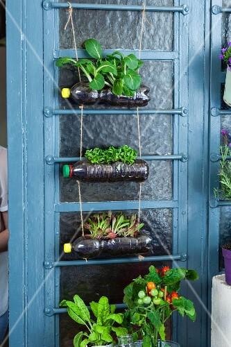 Plastic bottles upcycled into decorative hanging planter