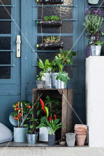 Platform outside front door decorated with potted vegetable plants and herbs
