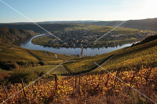 Wine-growing landscape by the Mosel River