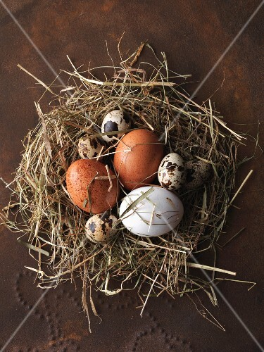 An arrangement of various eggs in a nest of hay