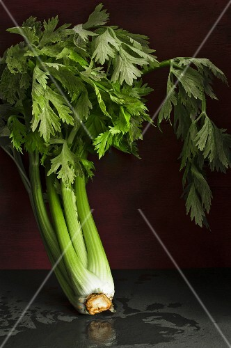 Celery against a dark wall