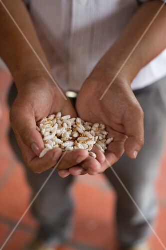 Hands holing puffed rice in Vietnam