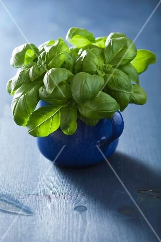 Fresh basil in a blue cup
