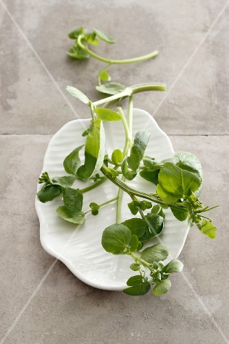 A plate of fresh watercress