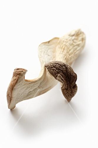 A dried king trumpet mushroom