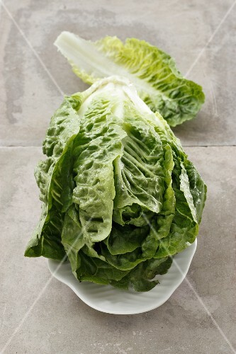 A lettuce on a white plate