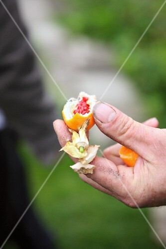 A person holding a broken exotic fruit