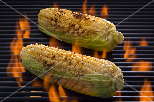 Seasoned corn-on-the-cob on a barbecue