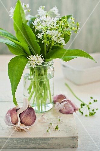 Wild garlic with flowers in a glass of water with garlic cloves on a chopping board