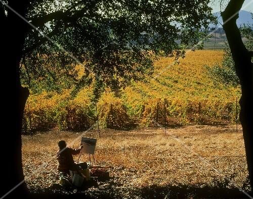Picturesque autumn colours in Napa vineyard, California