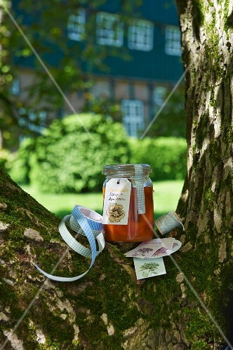 A jar of home-made apricots syrup in the fork of a tree