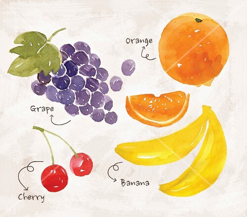 An arrangement of fruit with grapes, oranges, cherries and bananas (illustration)