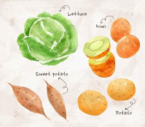 An arrangement of lettuce, kiwi, potatoes and sweet potatoes (illustration)