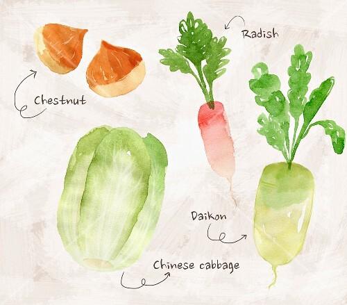 an arrangement of edible chestnuts, radish, daikon radish and Chinese cabbage (illustration)