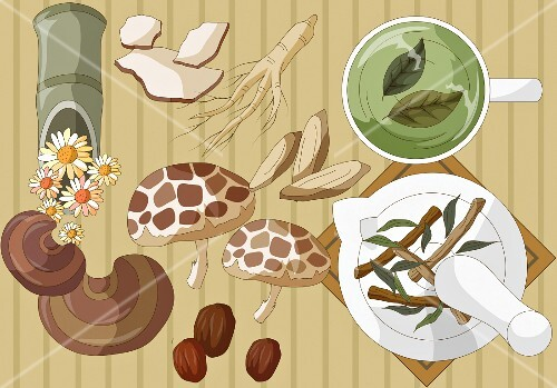 An arrangement of mushrooms, herbs, roots and flowers (illustration)