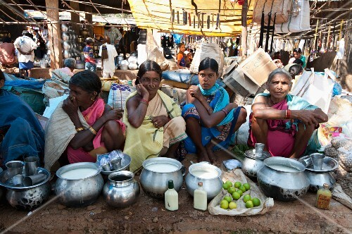 Mali women with gold nose-rings selling yoghurt from metal pots at a weekly market in Guneipada, Orissa, India