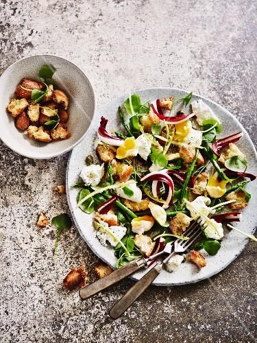 Bread salad with mozzarella