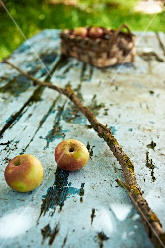 Still-life arrangement with two apples and weathered branch on vintage garden table