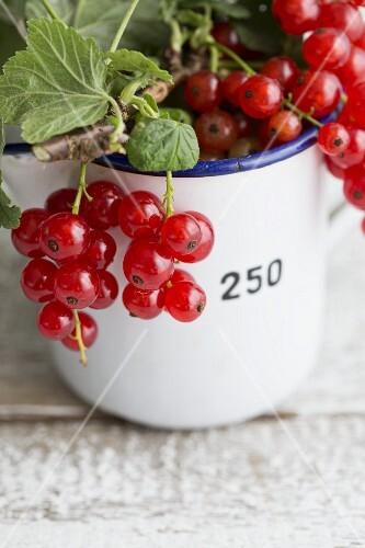 Sprigs of redcurrants in an enamel mug