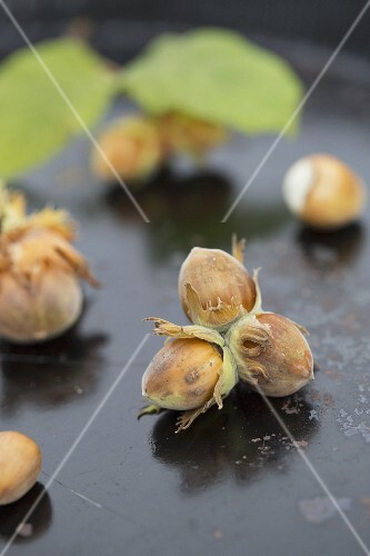 Hazelnuts on a black baking tray