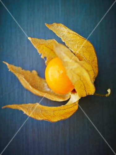 A physalis on a blue surface