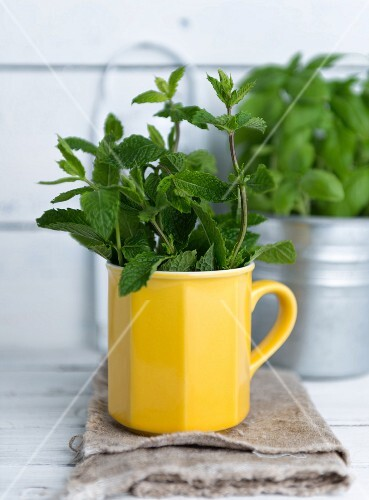 Fresh peppermint in a yellow cup